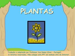 De que precisam as plantas para crescer