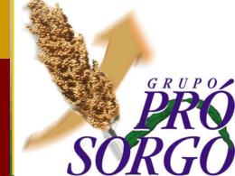 SORGO NO BRASIL: PASSADO , PRESENTE E