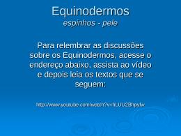 Equinodermos espinhos