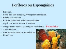 Poríferos ou Espongiários
