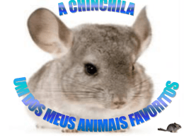 Rodrigo_Chinchila