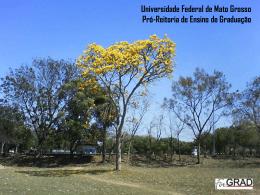 Irene - Universidade Estadual de Mato Grosso do Sul