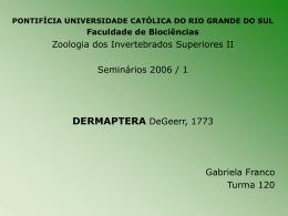 Dermaptera-Gabriela