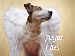 a grande lição dos cães