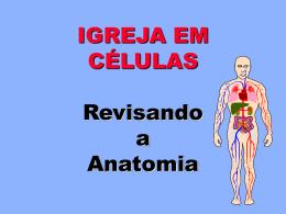 4 Anatomia Completo