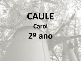 Caule – Aéreo - Escola Palomar de Lagoa Santa