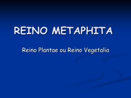REINO VEGETALIA - Colégio Santa Cruz