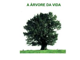 a árvore da vida - Comunidades.net