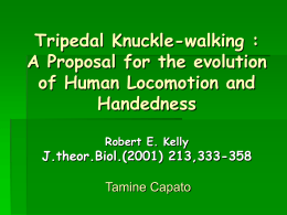 Tripedal Knuckle-wlaking : A Proposal for the evolution