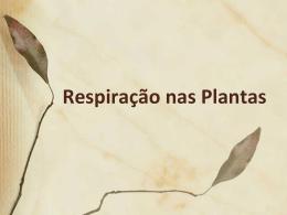 Respiração plantas
