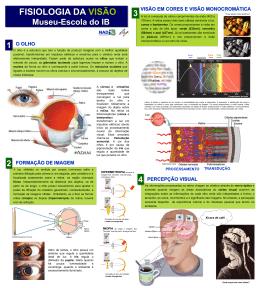 Poster sobre a Fisiologia da Visão