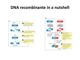 DNARecombinante_ClonagemGenica