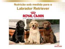 palestra royal canin - ração especifica labrador