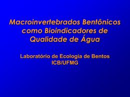 Conheça mais sobre macroinvertebrados bentônicos