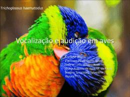 COMPETIÇÃO VOCAL ENTRE MACHOS