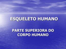 ESQUELETO HUMANO PARTE SUPERIORA DO CORPO