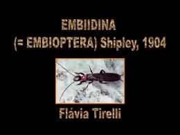 Embiidina-Flavia