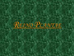 reinoplantae