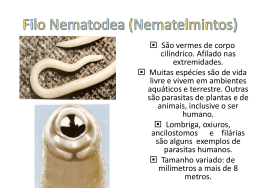 Filo Nematodea (Nematelmintos)