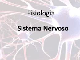 Neurotransmissores são essenciais para a transmissão de impulsos