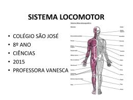 Sistema Locomotor - Colégio São José
