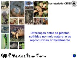 Diferenças entre as plantas colhidas no meio natural e as