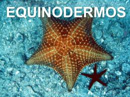 Aula-de-Equinodermos