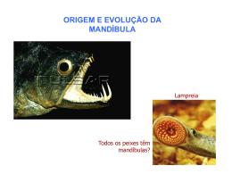 Evolução Cap 3 (Animais) 2012