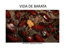 VIDA DE BARATA