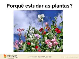 PORQUÊ ESTUDAR AS PLANTAS?