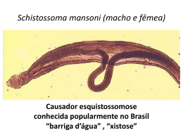 Schistossoma mansoni