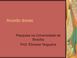 Arundo donax - Hary Schweizer