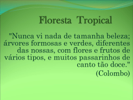 Floresta Tropical - Colégio Machado de Assis