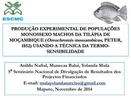 produção experimental de populações monossexo machos da tilápia