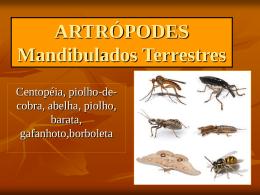 ARTRÓPODES insetos