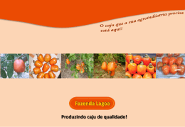 plano-de-marketing-comercializacao-do-caju