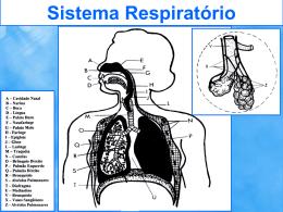 Sistema Respiratório Sistema Respiratório Sistema Respiratório