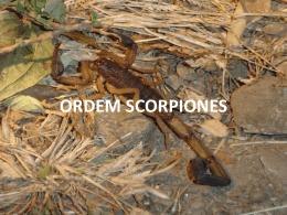 ORDEM Scorpiones Pseudo Opiliones
