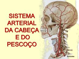 Sistema Arterial da Cabeça e do Pescoço 6,46 MB