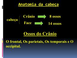 Anatomia da cabeça e coluna vertebral.
