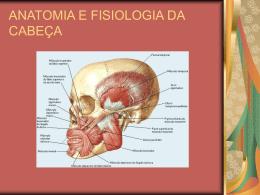 ANATOMIA E FISIOLOGIA DA CABEÇA