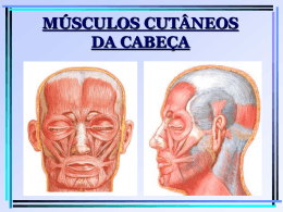 MÚSCULOS CUTÂNEOS DA CABEÇA