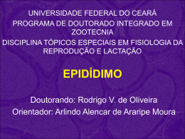 epidídimo - Universidade Federal do Ceará