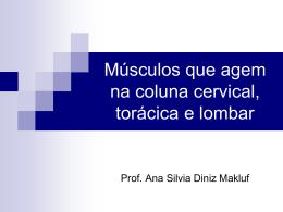 Músculos que agem na coluna cervical, torácica e lombar