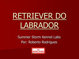 palestra royal canin - raça retriever do labrador