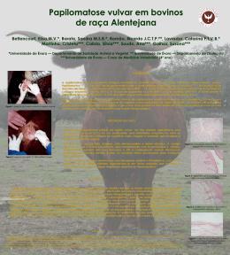 Poster papiloma - Universidade de Évora
