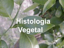 HISTOLOGIA_VEGETAL_TECIDOS