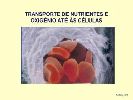 TRANSPORTE DE NUTRIENTES E OXIGÉNIO ATÉ ÀS CÉLULAS