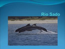 Trabalho sobre o Rio Sado - Gonçalo, Renato e Francisco