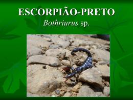 ESCORPIÃO PRETO Bothriurus